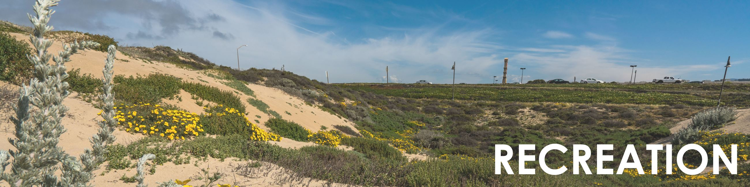 Sand dunes and plants near beach