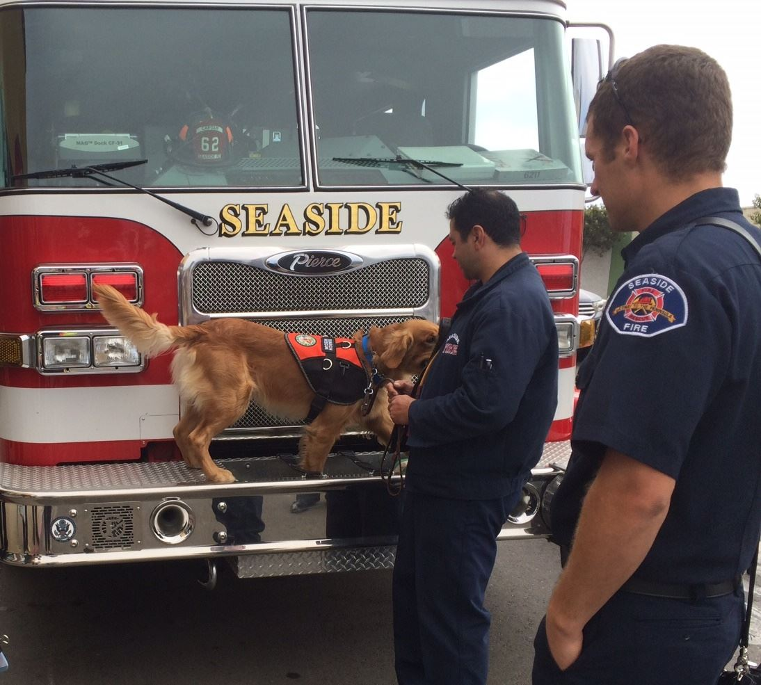 Search canine on fire truck with two firefighters