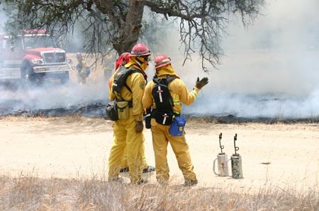 Firefighters Managing a Field Fire
